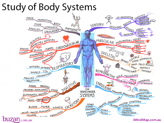recognise healthy body systems in a Hltap301a recognise healthy body systems in a health care context ©a de maria assessment guide 2009 2 conditions of use ©2009 this is a controlled document.