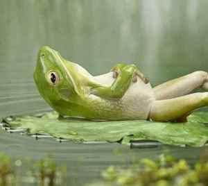 reclining_frog