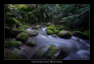Tasmanian Wonder by Matthew Blom