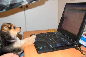 """On the internet nobody knows your a dog"" by konszvi, Flickr, Creative Commons"